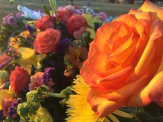 orange-tipped-rose