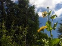 High Park's Natural Beauty