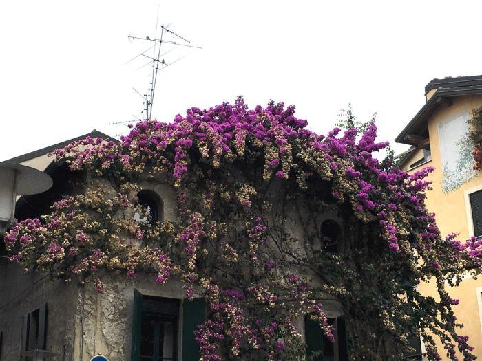 Mediterrane Blütenpracht