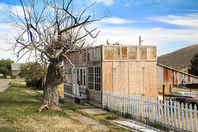 Montana town with twisted tree