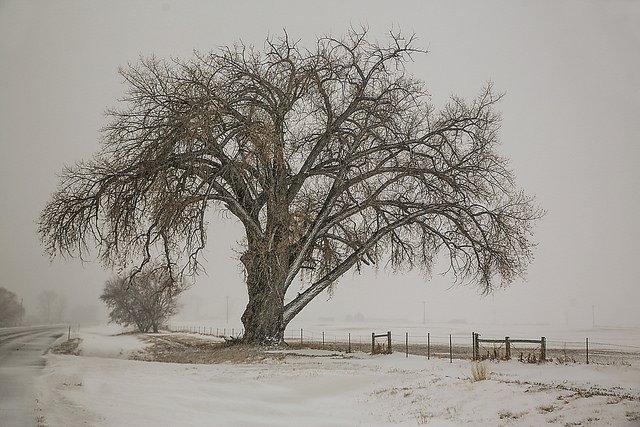 tree on a snowy day