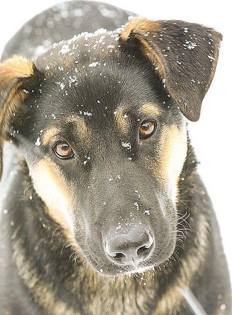 inquiring dog
