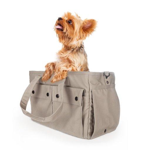 puppy in a purse