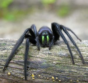 The Tube spider; beware!