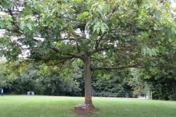Queen Elizabeth's Hurley Oak.