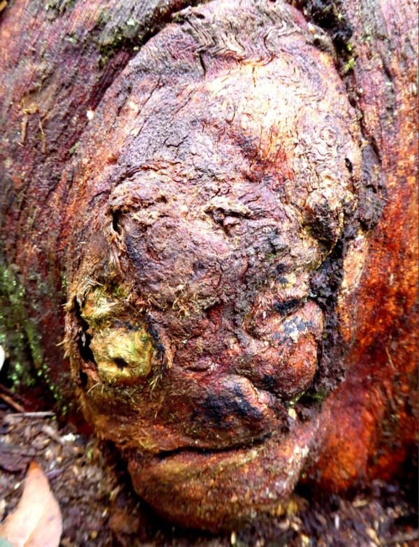 Creepy tree trunk