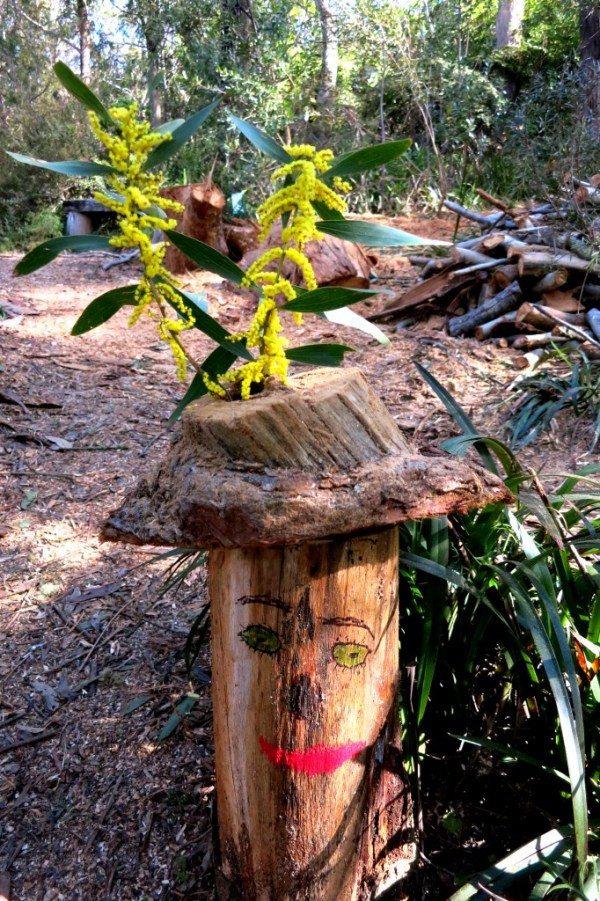 Stump art Wattle bloom