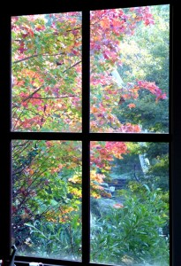 Autumn from the sudio 008