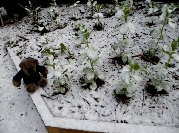 Editor Des and the snow in his garden.