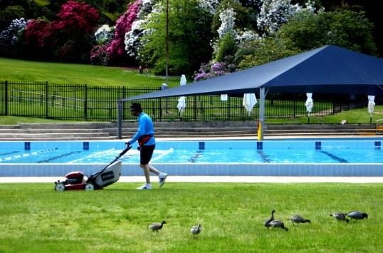 Blackheath pool Memorial Park.