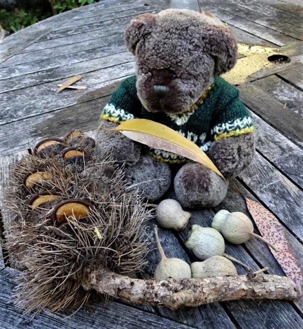 Editor Des with banksia and gum nuts