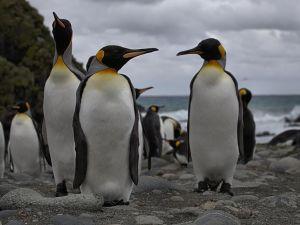 Antarctic art.