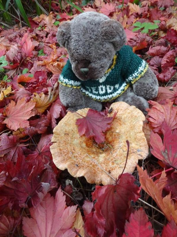 Editor Des in Autumn  studying fungi.