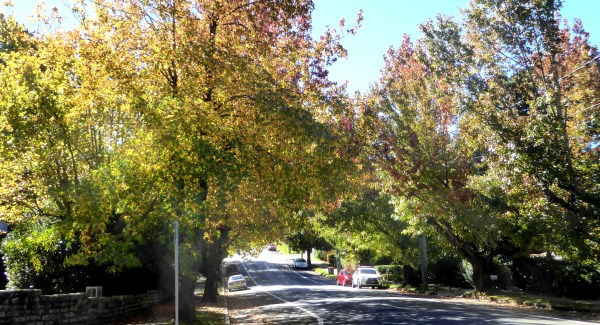 Early autumn in Wentworth Street, Blackheath
