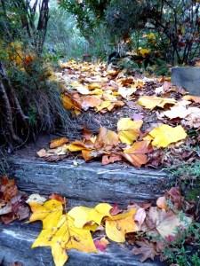 Wooden steps tulip tree leaves