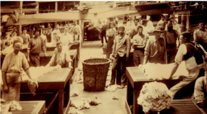 Wool sorting at Burrawang, Forbes