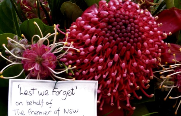 Waratah for Remembrance