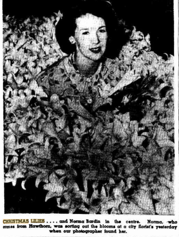 Christmas lily display in Australia, 1950