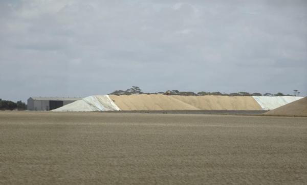 Stockpiled wheat