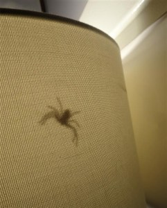 Spider in bedside lamp.