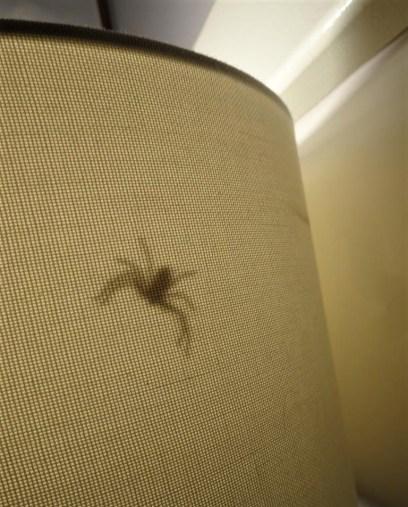 Spider in bedside lamp.
