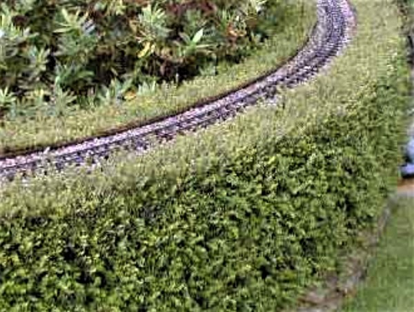 Lonicera hedge shaped into railway