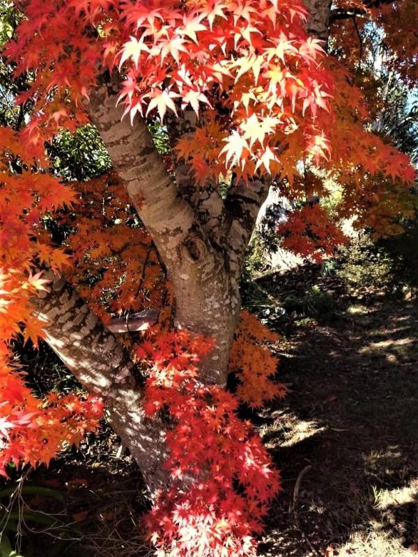 Autumn in Blackheath NSW