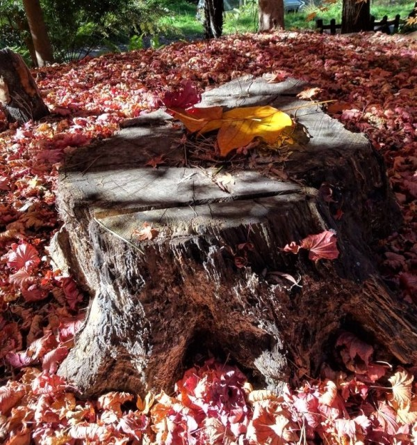 Stump seat in Autumn