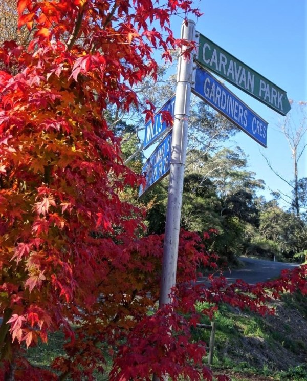 Autumn in Blackheath NSW