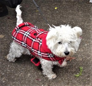 Little dog at Blackheath Farmer's Market.