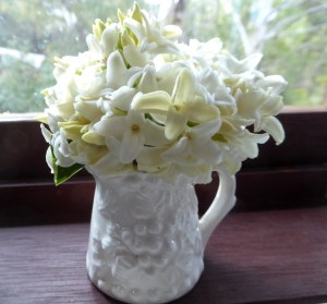 White daphne