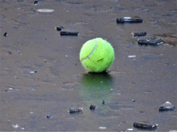Tennis ball on frozen Blackheath duck pond.