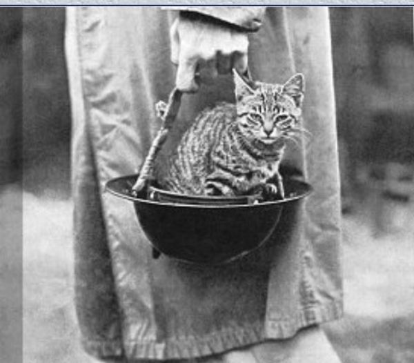 Cat in a soldier's helmet.