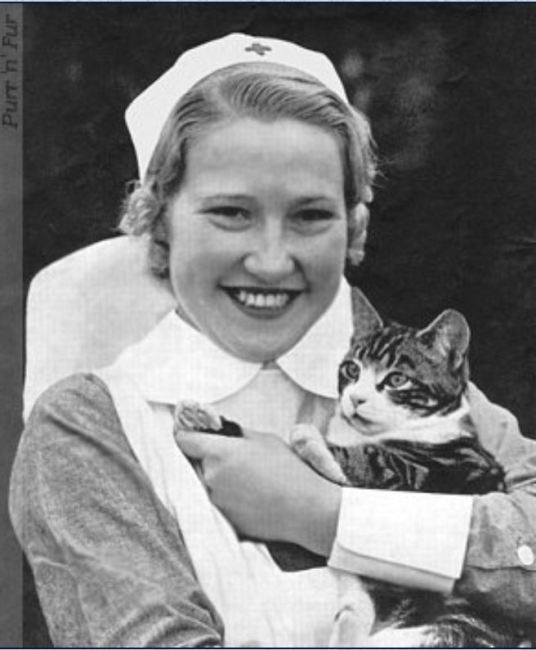 Cats were often mascots.  Here is one pictured with  a British Nurse in WWII.