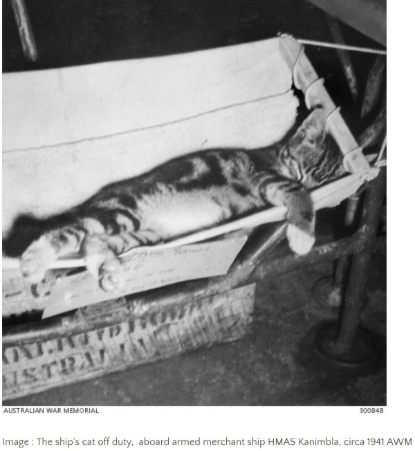 Cat in its hammock during WWII
