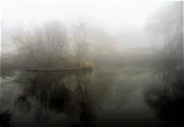 Misty duck pond in Blackheath.