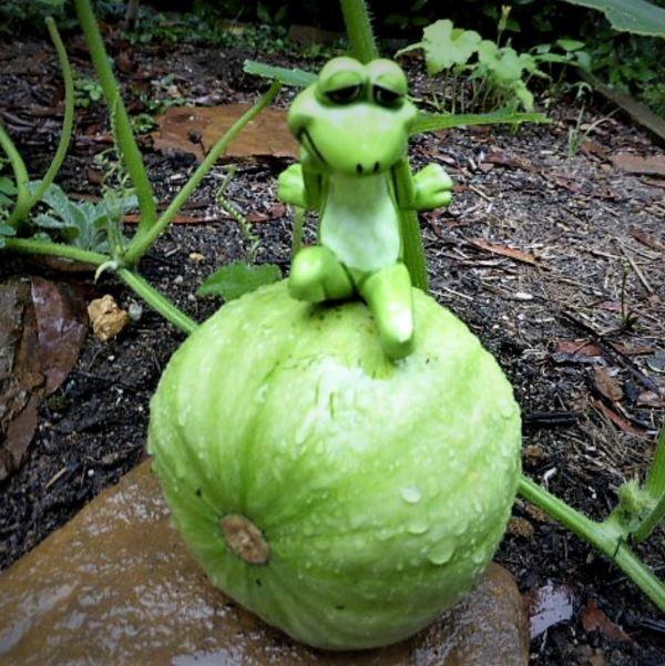Froggy on a pumpkin