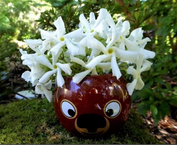 Whimsical posy of star jasmine