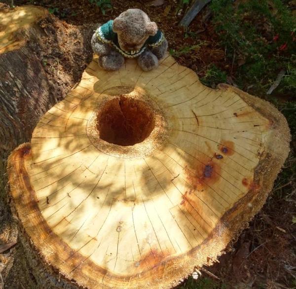 Eucalypt trunk 'planter'.