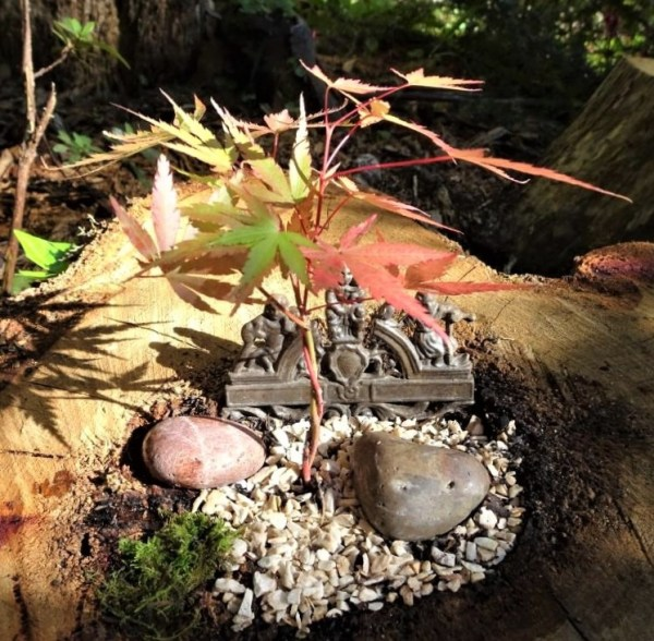 Tree stump bonsai garden
