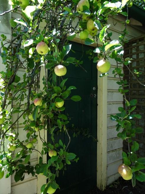 Apples around the door