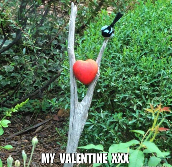 Valentine meme