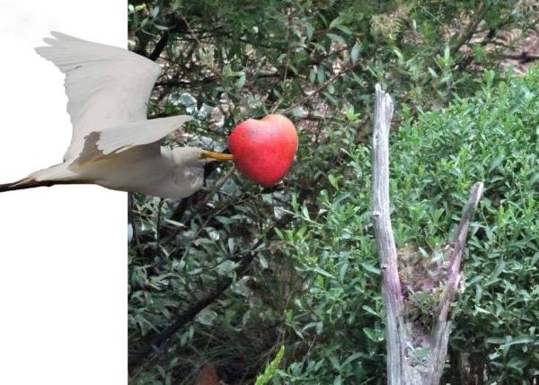Bird stealing the Valentine heart