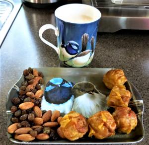 Blue wren lunch