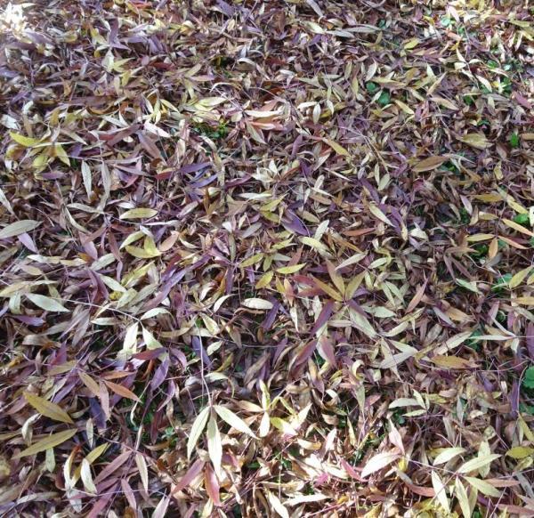 Autumn leaf carpet
