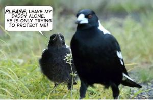 Magpie cartoon