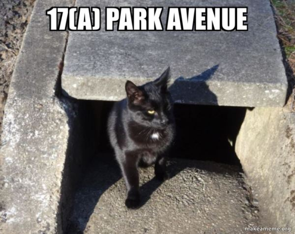 Blackheath 'bunker' cat.