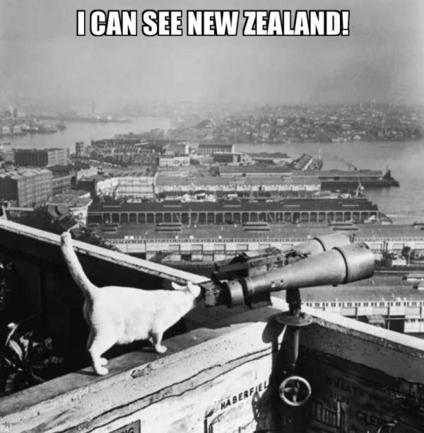 One of the  Sydney Harbour Bridge cats.