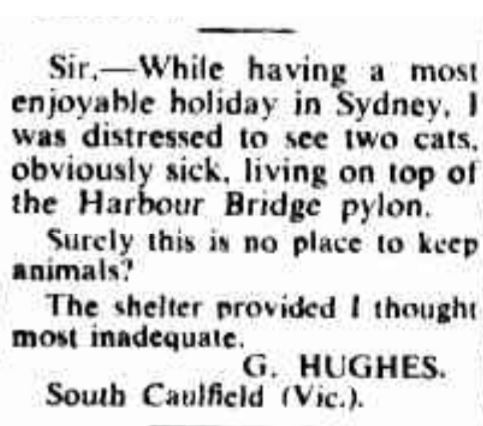 Letter of concern  about the Harbour Bridge cats.