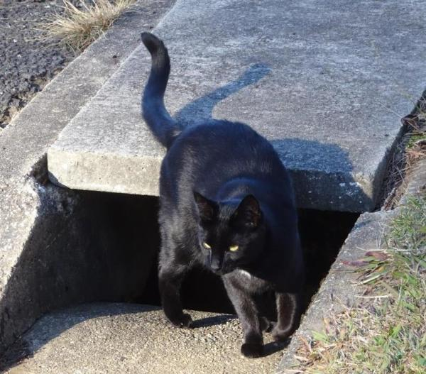 The mystery black cat of Blackheath